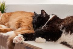 Closw up Two cats, auburn and black and white, are sleeping peacefully on a warm battery, huddling together. Friendship of animals royalty free stock images