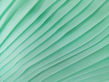 Cloth green young stripes Stock Images