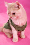 Clothed cat. A clothed cat looking away stock images