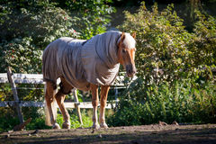 Clothed Horse Stock Photography