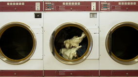 Clothes Dryer Spinning
