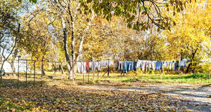 Clothes drying on a rope between trees in the autumn Royalty Free Stock Photo