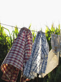 Clothes are hanging on clothesline Royalty Free Stock Photo