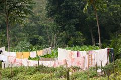 Clothes in nature Stock Image