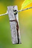 Clothes-peg. Wooden clothes-peg in the garden Stock Photos
