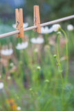 Clothes peg in garden Royalty Free Stock Image