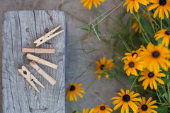 Clothes peg in garden Royalty Free Stock Images