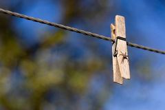 Clothes peg with a spider Royalty Free Stock Image
