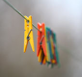 Clothespin. On the cord. Leader and staff Royalty Free Stock Photography