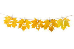Clothespins on the rope holding autumn leaves on a white backgro Royalty Free Stock Photo