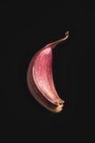 Clou de girofle d'ail sur le noir Photographie stock libre de droits