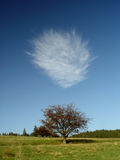 Cloud above lonely tree in summer at the apex of the green hill Stock Photography