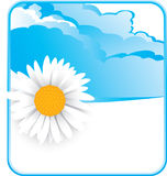 Cloud background with a daisy flower Stock Images