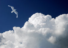 Cloud and bird Royalty Free Stock Photo