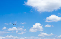 Blue sky with clouds. With frying bird royalty free stock photography
