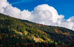Cloud on a blue sky over the forest on hill Royalty Free Stock Image