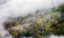 Cloud covered fall forest at the Bridal Veil Falls Provincial Pa Stock Photos