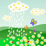 Cloud of daisies with rain Royalty Free Stock Image