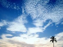 Cloud with distant tree Royalty Free Stock Image