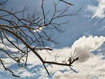 cloud drzewa zdjęcia royalty free