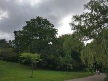 cloud drzewa Obrazy Stock