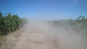 Cloud of dust over a rural dirt road. Cloud of dust over a road in the middle of vine, rows of vine, countryside stock video