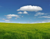 Cloud and field. Grass filed agiant blue sky royalty free stock images