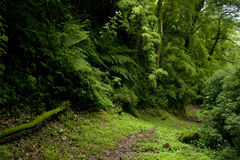 Cloud Forest Stock Images
