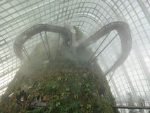The Cloud Forest Stock Images