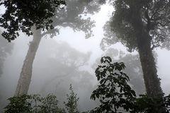 Cloud Forest of Boquete Stock Photography