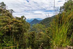 The cloud forest. A natural sanctuary north-west of Quito Stock Photos