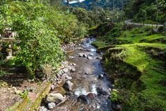 The cloud forest. A natural sanctuary north-west of Quito Stock Photography
