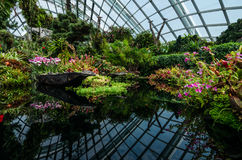 Cloud Forest Dome at Garden by the bay. Singapore – 25 March 2016: Small pond with plants and reflection in Cloud Forest Dome at Garden by the bay. A man made Stock Photos