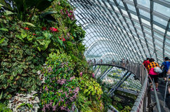 Cloud Forest Dome at Garden by the bay. Singapore – 25 March 2016: Tropical mountain along with plants and water fall in Cloud Forest Dome at Garden by the bay Royalty Free Stock Image