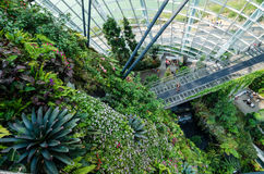 Cloud Forest Dome at Garden by the bay. Singapore – 25 March 2016: Tropical mountain along with plants and water fall in Cloud Forest Dome at Garden by the bay Royalty Free Stock Photos