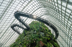 Cloud Forest Dome at Garden by the bay. Singapore – 25 March 2016: Tropical mountain along with plants and water fall in Cloud Forest Dome at Garden by the bay Stock Image