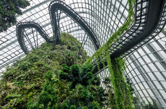 Cloud Forest Dome at Garden by the bay. SINGAPORE – 25 March 2016: Tropical mountain along with plants and water fall in Cloud Forest Dome at Garden by the bay Stock Photography