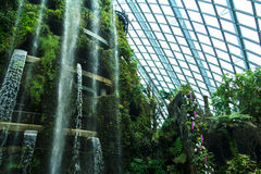 Cloud Forest Dome Stock Image