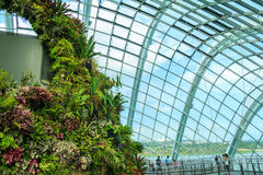 Cloud Forest Dome Royalty Free Stock Image