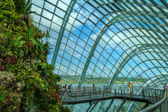 Cloud Forest Dome Stock Photo