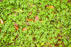 Cloud forest floor Royalty Free Stock Photography
