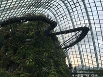 Cloud forest in Garden by the Bay in Singapore landmark. Taken at the lower level when working down the stairs. The view is excellent for the mountain of plants Stock Photography