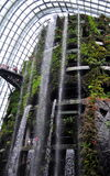 Cloud forest - Gardens by the bay. A 35-metre tall mountain covered in lush vegetation shrouding the world's tallest indoor waterfall showcases plant life from Stock Photo
