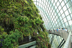 Cloud Forest, Gardens by the Bay. Stock Photo