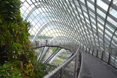 Cloud Forest Royalty Free Stock Photo
