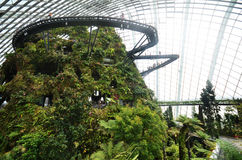 Cloud Forest at Gardens by the Bay in Singapore Royalty Free Stock Photo