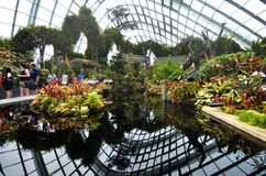 Cloud Forest at Gardens by the Bay in Singapore Stock Image