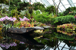 Cloud Forest at Gardens by the Bay in Singapore Stock Photography
