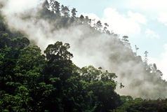 Cloud forest, Guatemala Stock Image