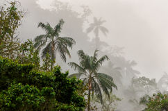 Cloud forest Stock Image